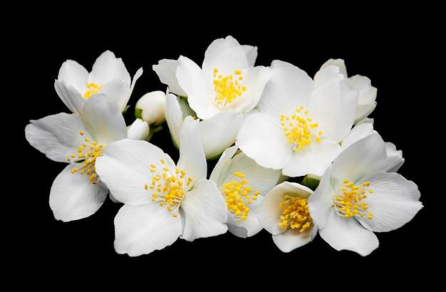 Flores de jasmim
