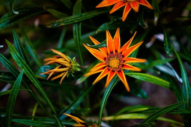 Flores de laranja na borda das folhas com plantas verdes