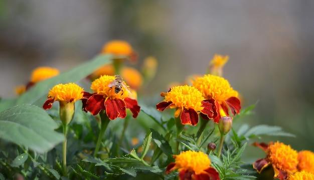 Flores de laranja no jardim