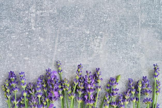 Flores de lavanda em fundo cinza. copyspace, vista de cima