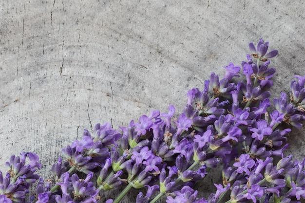 Flores de lavanda em um fundo cinza de um velho toco