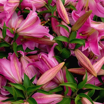 Flores de lírio delicadas e brilhantes em um canteiro de flores