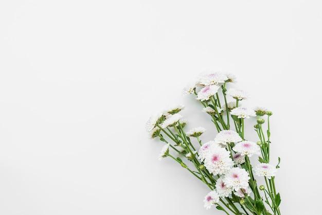 Flores de luz frescas simples em hastes