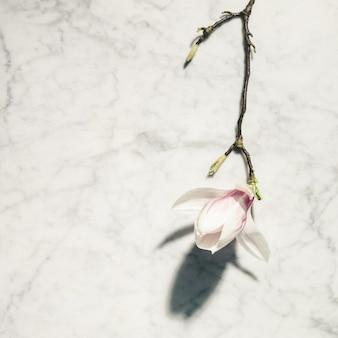 Flores de magnólia rosa linda na mesa de mármore branca. vista do topo. configuração plana. conceito mínimo de primavera.