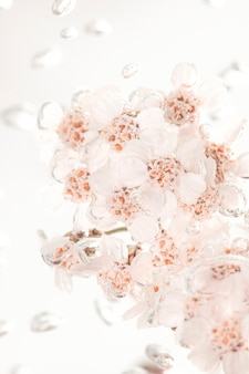 Flores de mil-folhas brancas em água borbulhante