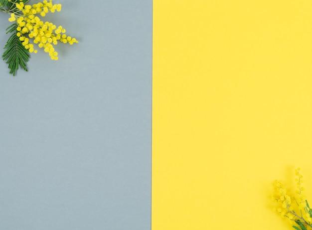 Flores de mimosa amarela em fundo amarelo e cinza. cor do ano. copie o espaço.