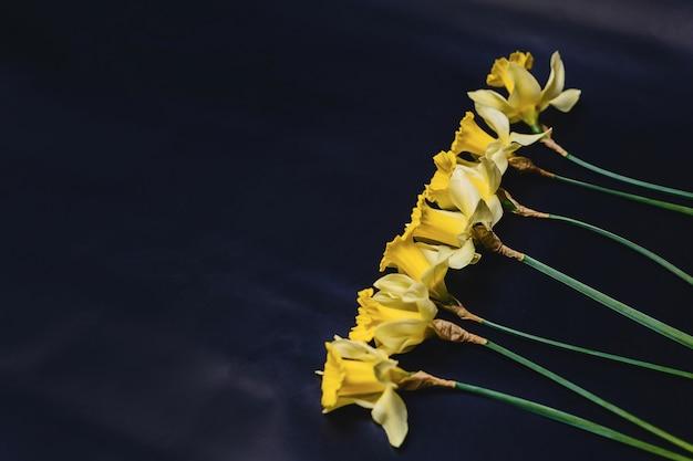 Flores de narcisos amarelos em fundo escuro
