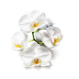 Flores de orquídea brancas e pedras de spa isoladas em um caminho de recorte de fundo branco incluído