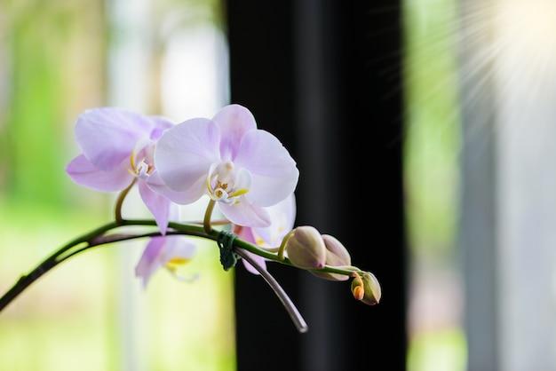 Flores de orquídea brancas na árvore