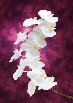 Flores de orquídea brancas