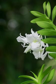 Flores de orquídea com cores bonitas.