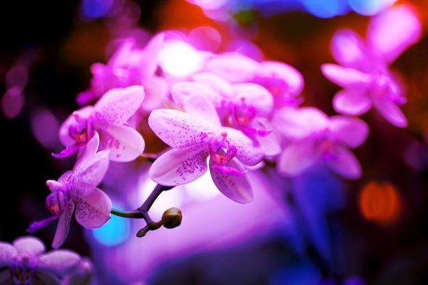 Flores de orquídea em tons neon