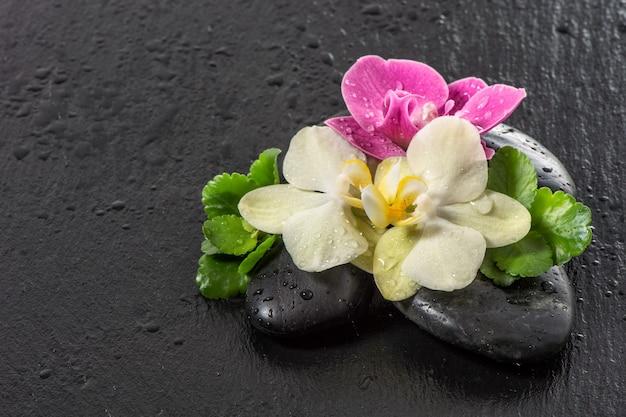 Flores de orquídea rosa e amarela com gotas de água em fundo escuro