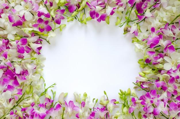 Flores de orquídea rosa e brancas