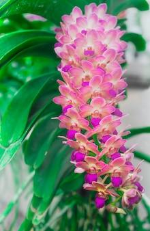 Flores de orquídea.