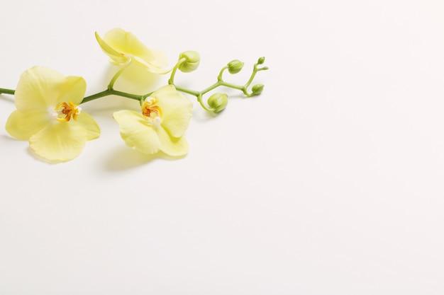 Flores de orquídeas amarelas