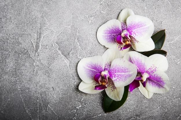 Flores de orquídeas cor de rosa