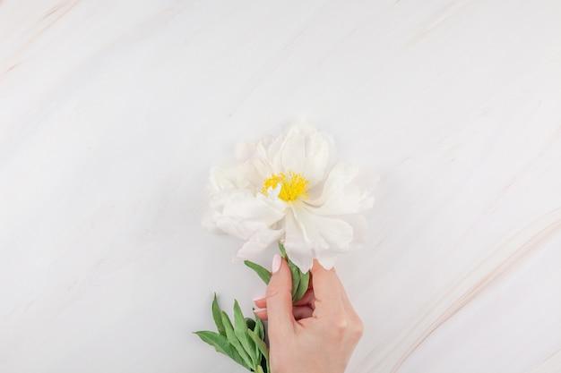Flores de peônia branca em fundo de mármore
