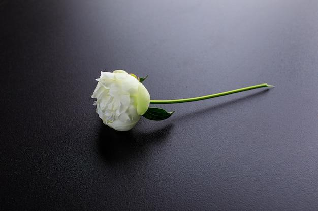 Flores de peônia branca isoladas no fundo preto. foto de alta qualidade