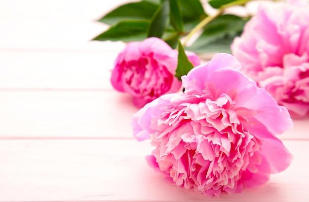 Flores de peônia purpure em fundo rosa de madeira.
