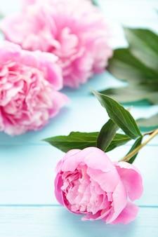 Flores de peônia rosa em madeira azul.