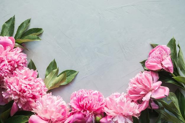 Flores de peônia rosa linda como moldura em concreto cinza. copie o espaço para texto. postura plana.