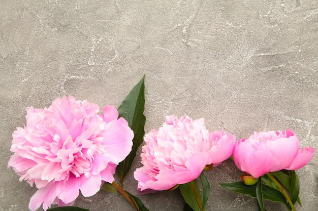 Flores de peônia rosa sobre fundo cinza de concreto.