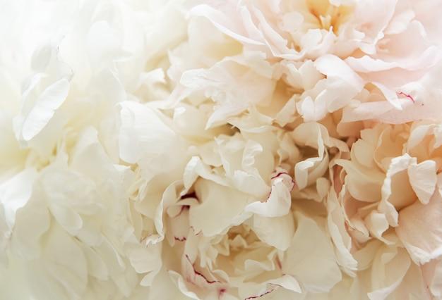 Flores de peônia