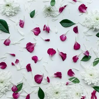Flores de pétalas com espaço de cópia em fundo branco.