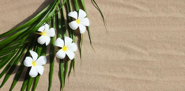 Flores de plumeria em folhas de palmeira tropical na areia. conceito de fundo de verão