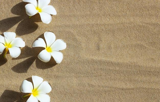Flores de plumeria no fundo da praia de areia