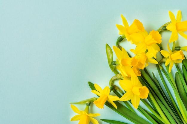 Flores de primavera amarelo narciso sobre fundo azul. feliz conceito de páscoa. vista superior com espaço de cópia