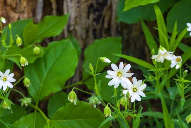 Flores de rabelera na floresta verde