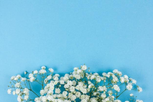 Flores de respiração do bebê branco lindo dispostas em pano de fundo azul