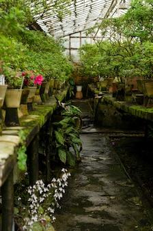 Flores de rododendro e plantas tropicais que crescem em uma estufa vintage.
