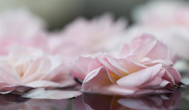 Flores de rosa pálido e pétalas brancas na água para um festival de água ou spa