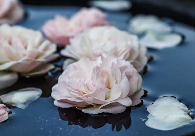 Flores de rosa rosa pálido e pétalas brancas na água azul para festival de água ou spa