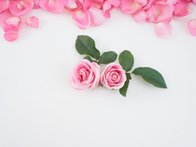 Flores de rosas cor de rosa com pétalas
