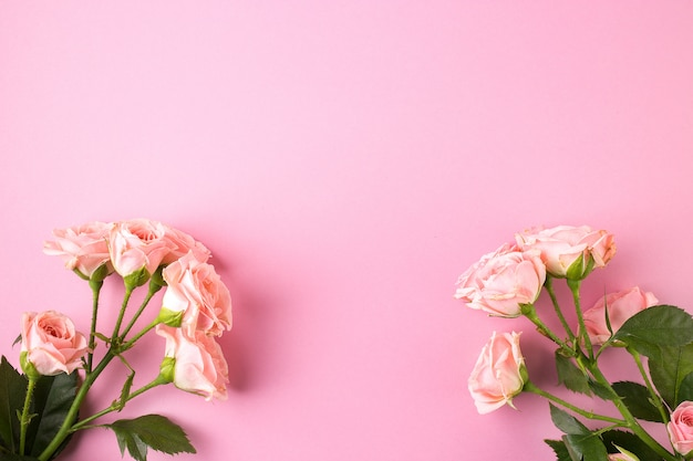 Flores de rosas cor de rosa em fundo rosa pastel
