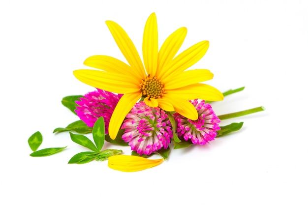 Flores de trevo e alcachofra de jerusalém
