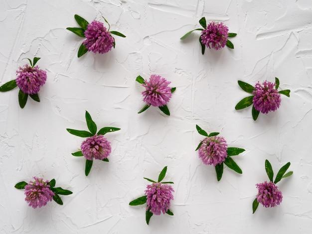 Flores de trevo em fundo branco