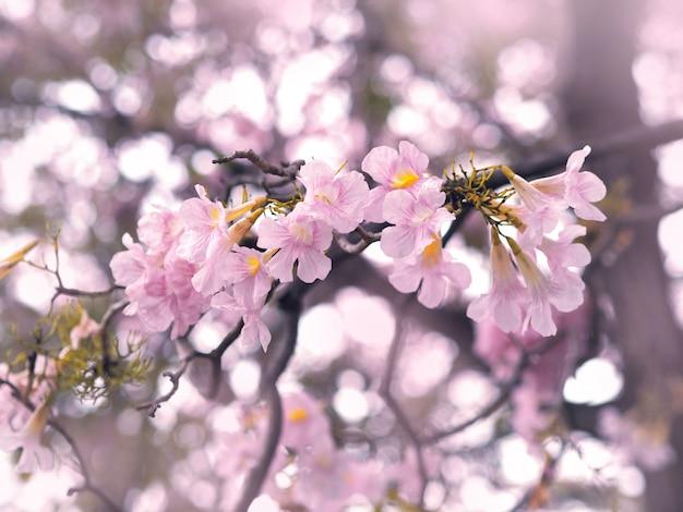 Flores de trombeta cor-de-rosa para a primavera ou o verão.
