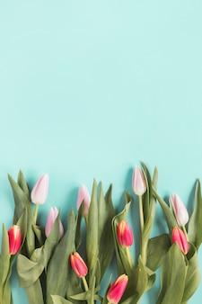 Flores de tulipa brilhante na mesa azul