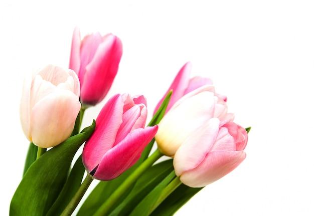 Flores de tulipa cor-de-rosa