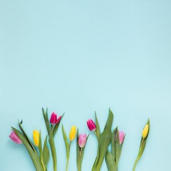 Flores de tulipa plana leigos e folhas sobre fundo azul, com espaço de cópia