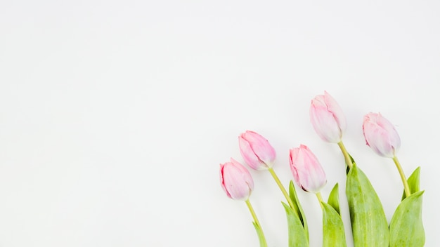 Flores de tulipa