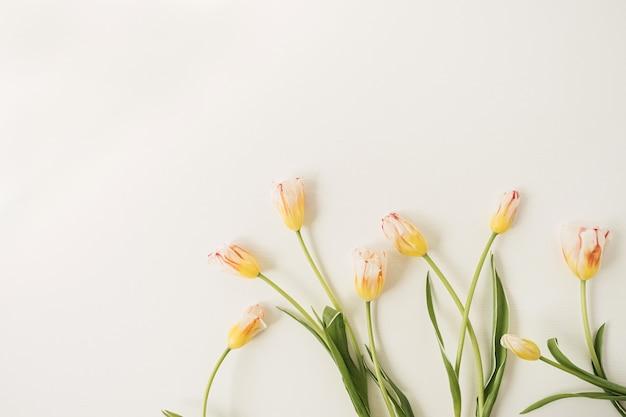 Flores de tulipas amarelas em branco