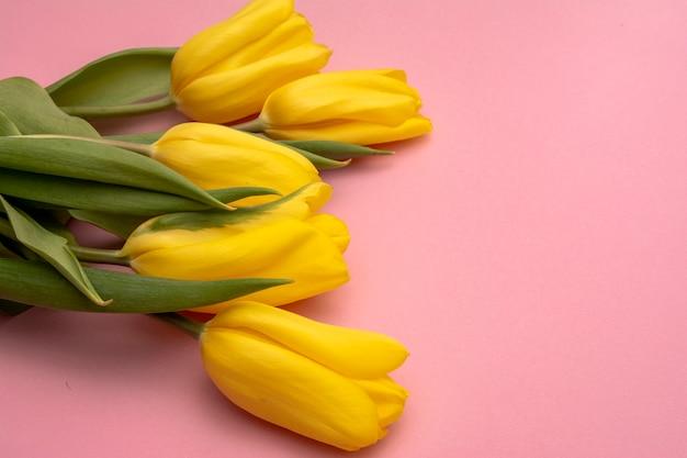 Flores de tulipas amarelas sobre fundo rosa. esperando pela primavera. cartão de feliz páscoa vista plana leiga, superior. copie o espaço para texto