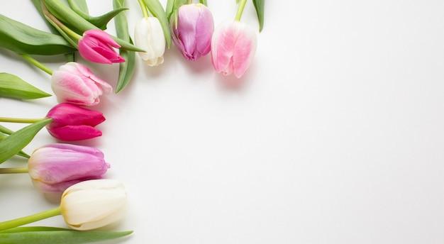 Flores de tulipas de vista superior com espaço de cópia