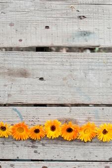 Flores de um fundo de calêndula medicinal com copyspace